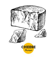 Hand drawn sketch cheese parmesan background of vector