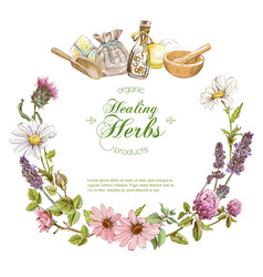 herbal banner vector image