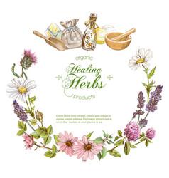 Herbal banner vector
