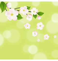 Pink apple tree flowers with bokeh vector