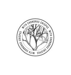 round emblem with hand drawn chondrus crispus vector image