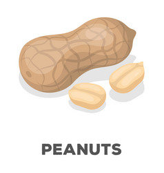 peanut in the shelldifferent kinds of nuts single vector image