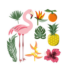 Beautiful set icon with exotic flamingo and vector