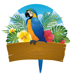 Blue and gold macaw sit on wooden banner vector