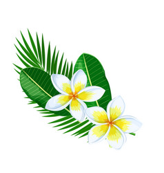 Plumeria summer tropical flower vector