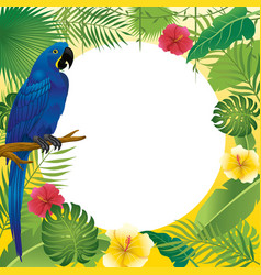 blue macaw and tropical plants vector image