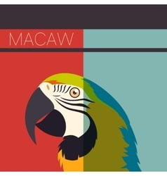 Flat postcard with Macaw vector image vector image