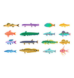 sea and freshwater fishes with bright scales vector image