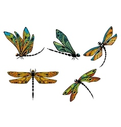 Dragonflies with ornamental openwork wings vector image vector image