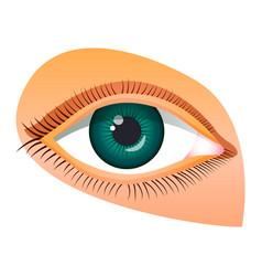human eye icon cartoon style vector image