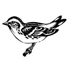 Siskin bird hand-drawn vector image