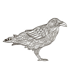 bird raven coloring book for adults vector image vector image