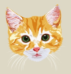 Muzzle pretty beautiful red-haired kitten vector
