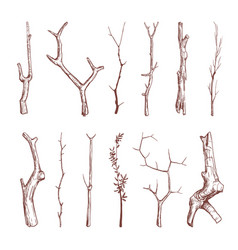 hand drawn wood twigs wooden sticks tree vector image