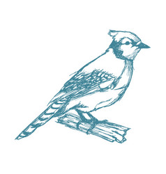 tufted titmouse bird branch posing for a portrait vector image vector image