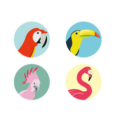 Exotic bird heads set icon vector
