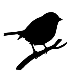 High quality Silhouette bird on ash branch vector