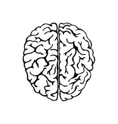 Human brain for medical design vector
