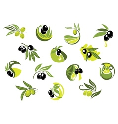 Olive tree branches with glossy olives vector