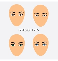Set of woman eyes types flat vector image vector image