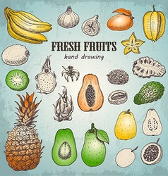 Set of fresh tropical fruits in sketch style vector image