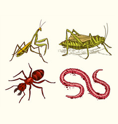 Big set of insects vintage pets in house mantis vector