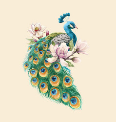 Watercolor peacock vector