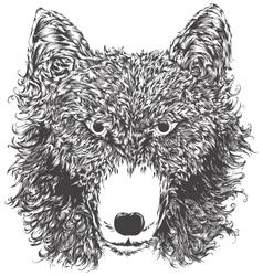 Wild wolf head vector