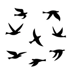 silhouette of a flock of birds vector image