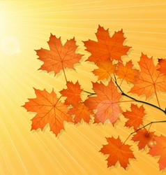autum picture vector image vector image