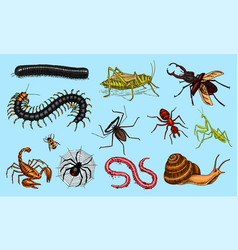 big set insects vintage pets in house bugs vector image