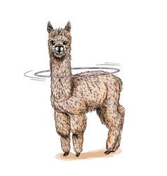 cule alpaca with hula hoop on neck full color vector image