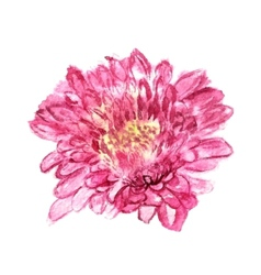 chrysanthemum pink vector image