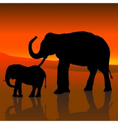 Elephants And Red Sky vector image vector image