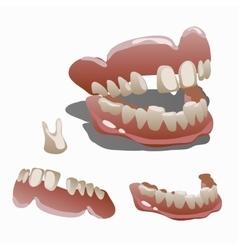 Human jaw and tooth molar closeup vector image vector image