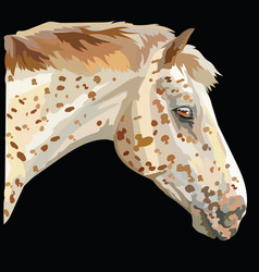 Colored horse portrait-2 vector