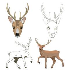 deer sketch set vector image
