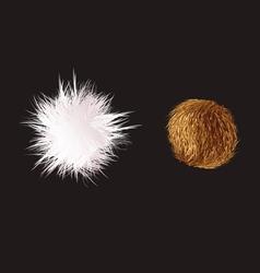 Fuzzball prickly vector