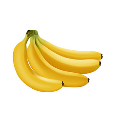 Realistic banana branch bananas vector