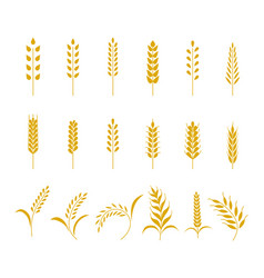 set of simple wheats ears icons and grain design vector image