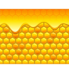 Honeycombs with honey vector image