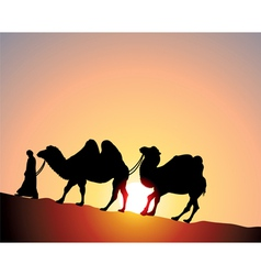 Camels and bedouin vector