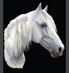 colored horse portrait-6 vector image