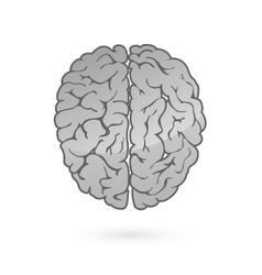 Human brain for medical design vector image