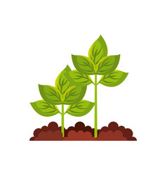 plant agriculture isolated icon vector image
