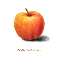 red apple hand drawn eps8 vector image