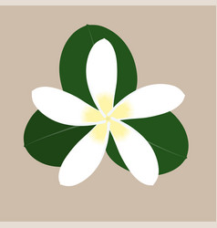 small white tropical flower with green leaves vector image