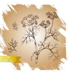 background sketch herbs - dill vector image vector image