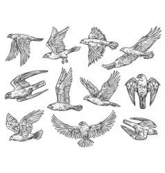 Birds of prey sketches eagle falcon and hawk vector