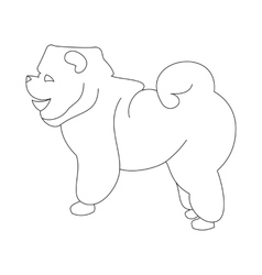 Chow linear dog vector